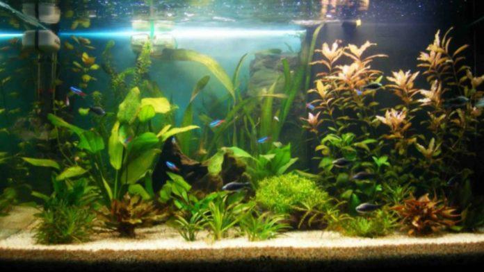 Pulizia acquario: i consigli per effettuarla in poche mosse