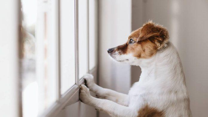 Come far smettere ad un cane di piangere