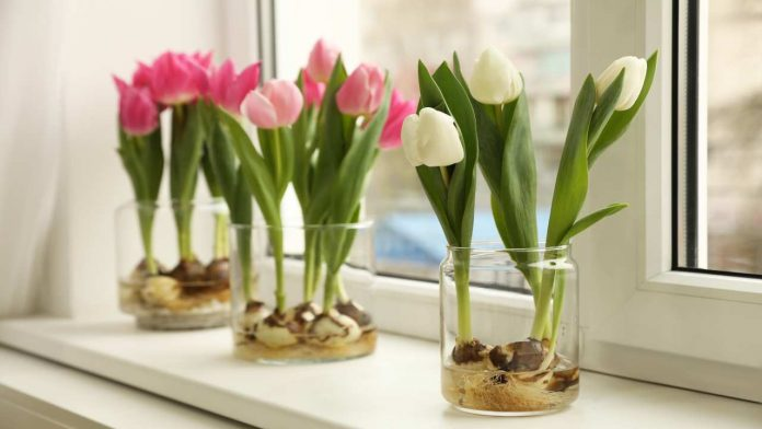 Come piantare i fiori