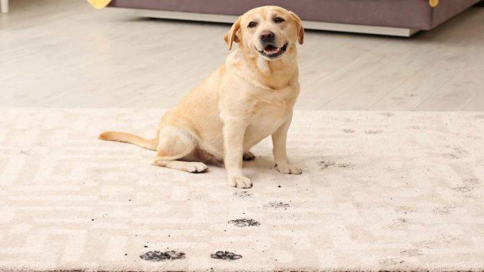 Igienizzare zampe cane