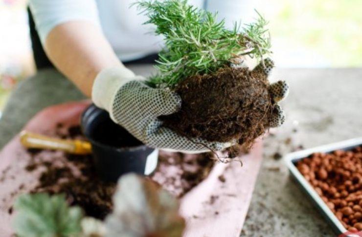 Come rinvasare piante: consigli fai da te per riuscirci in poche mosse
