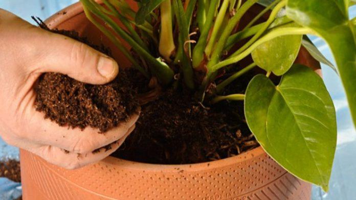 Come rinvasare piante: consigli fai da te per un risultato ottimale