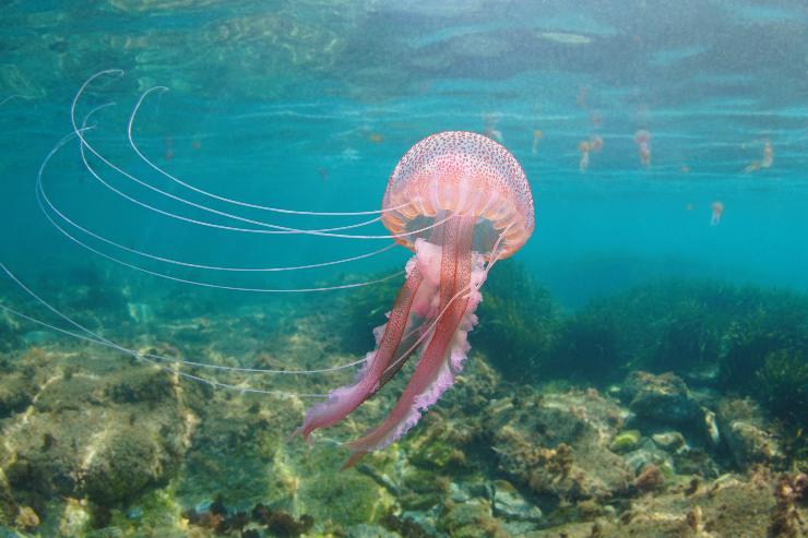 Punture da meduse