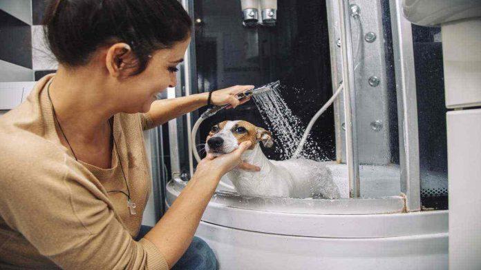 Lavare in casa un cane di piccola taglia
