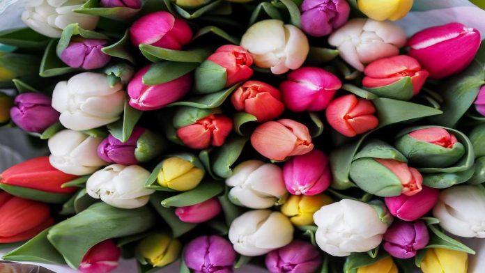 primavera e innamoramento