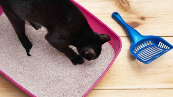 Pulizia lettiera gatto: consigli pratici su come effettuarla