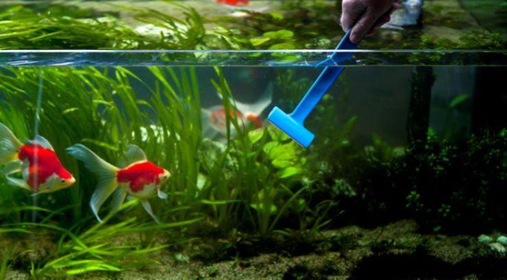 Pulizia acquario: come effettuarla seguendo questi semplici passaggi