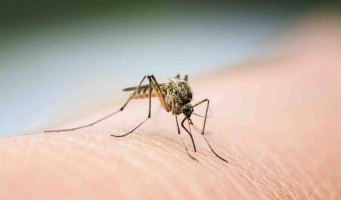 Rimedi naturali contro le zanzare: