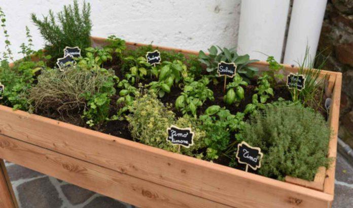 come curare le piante aromatiche