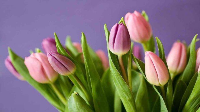 fiori freschi più a lungo