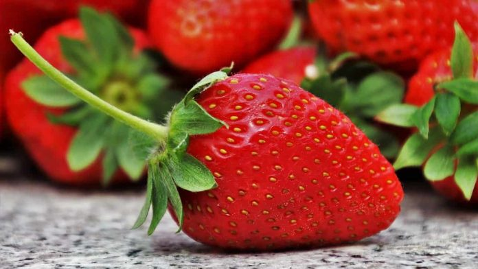 fragole tipologie