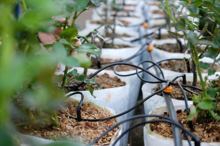 impianto irrigazione balcone