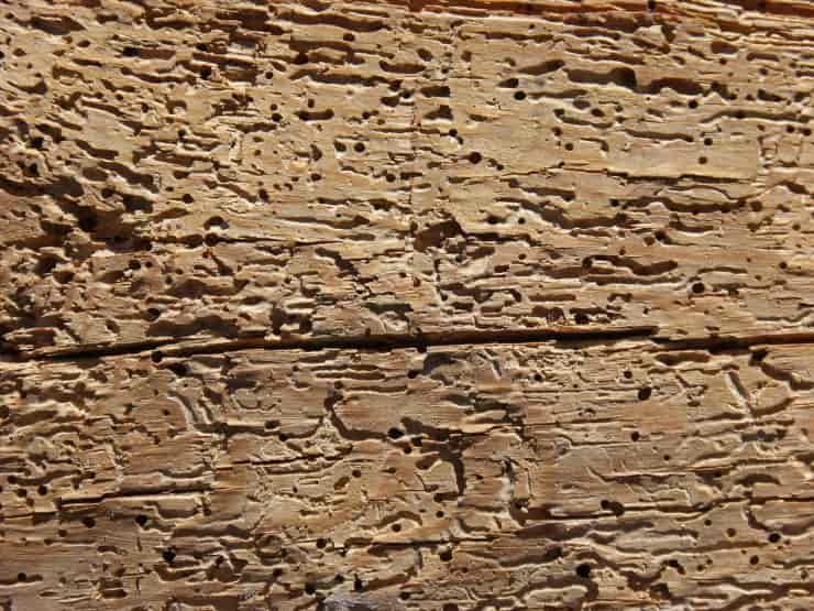 tarli legno eliminarli