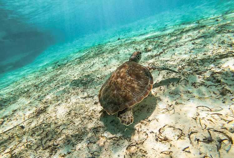 tartarughe d'acqua dolce