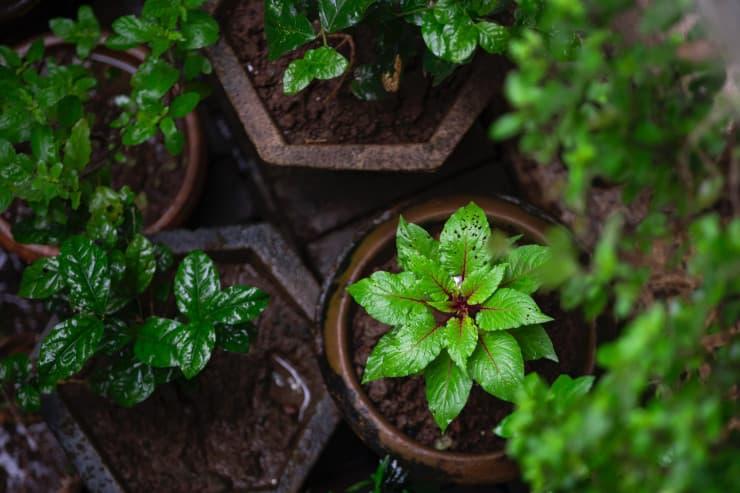 rinvaso piante