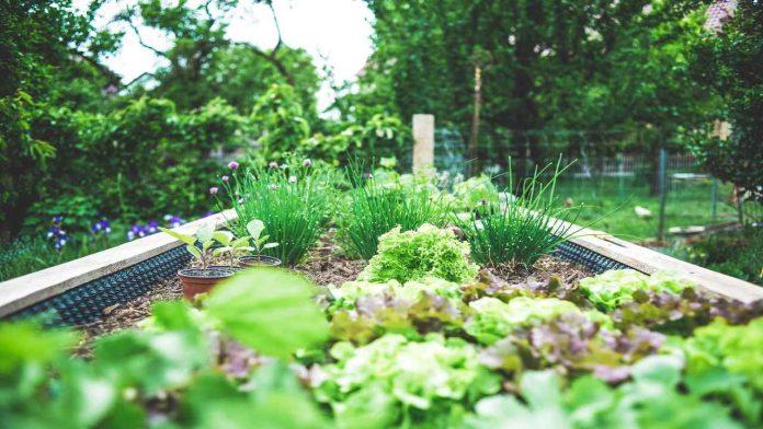 Le 5 regole per annaffiare il proprio orto