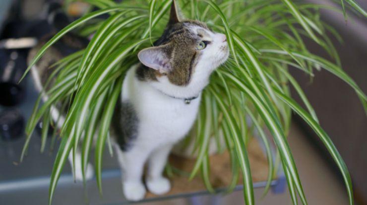 Gatti e piante: le 5 specie più tossiche per i nostri amici a quattro zampe