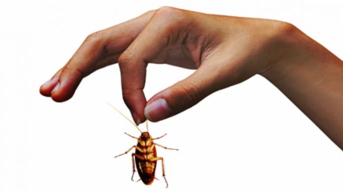 Come allontanare gli scarafaggi: i rimedi per debellarli definitivamente