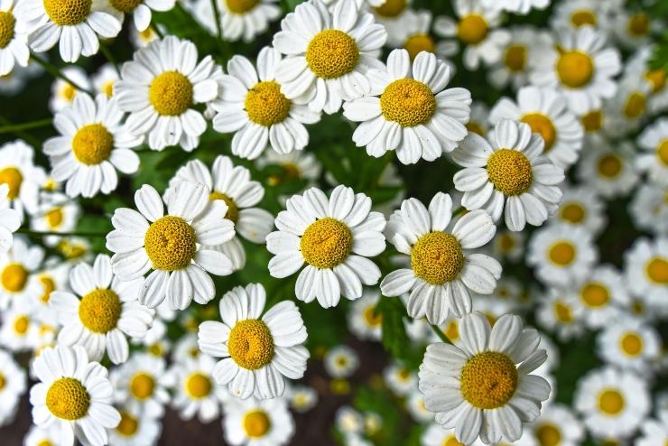 Gengivite: come alleviare i sintomi con i rimedi naturali