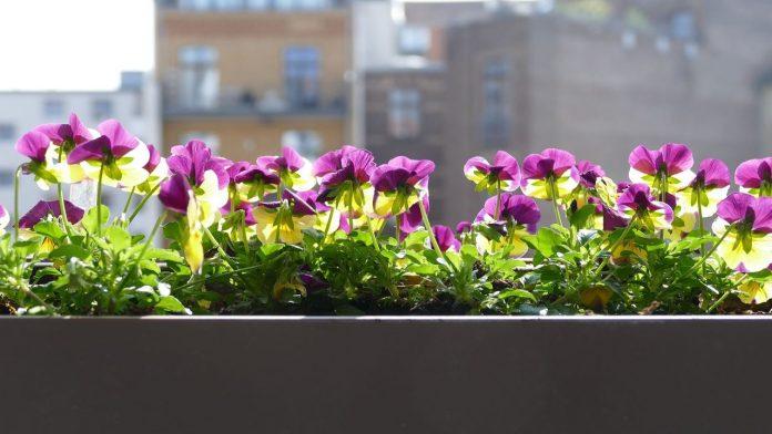 Balcone esposto a nord: le piante più adatte