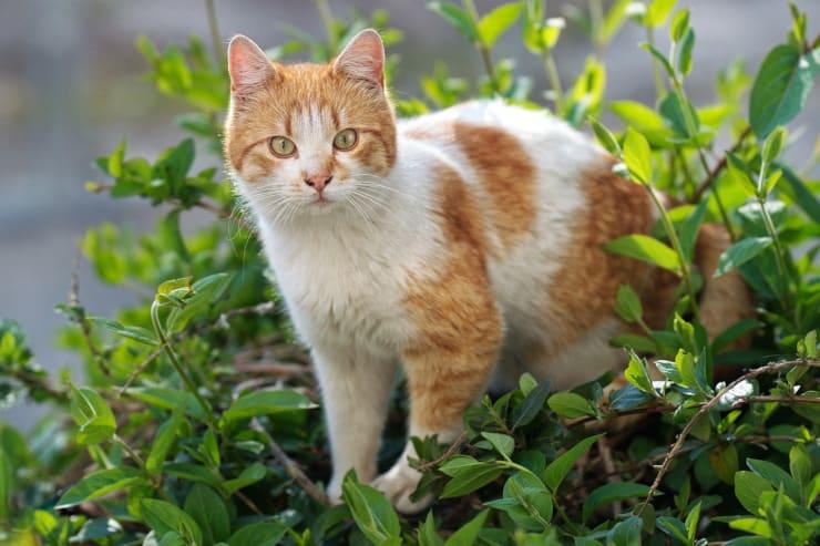 gatti casa piante