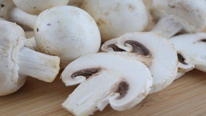 Funghi Champignon andati a male? Ecco come capirlo