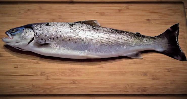 pesce fresco congelarlo