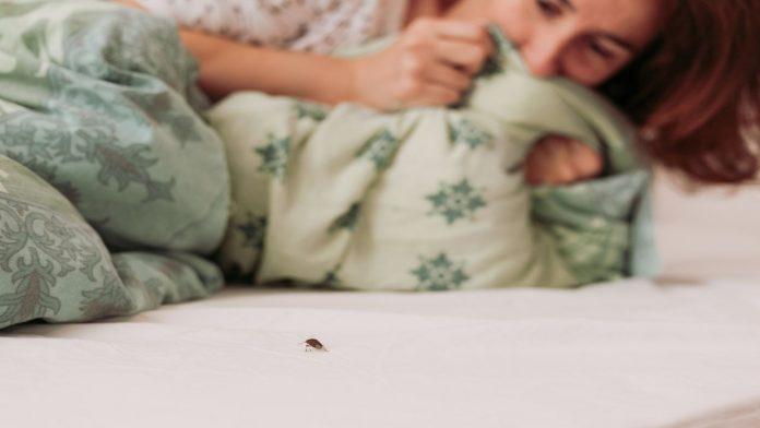 Cosa sono le cimici da letto e cosa fare in caso di punture