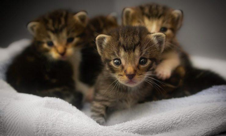gattini, allergia al pelo di gatto