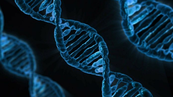 Mutazione MTHFR: cos'è e cosa comporta