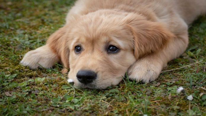 Avvelenamento nei cani: come comportarsi per evitare gravi conseguenze
