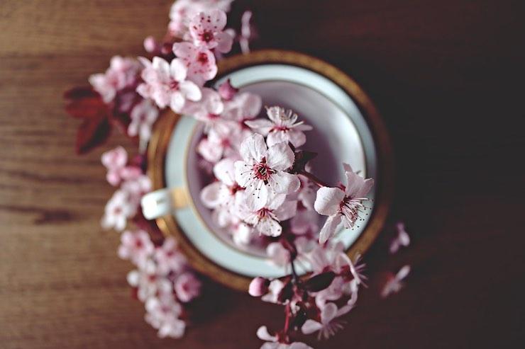 fiori ciliegie