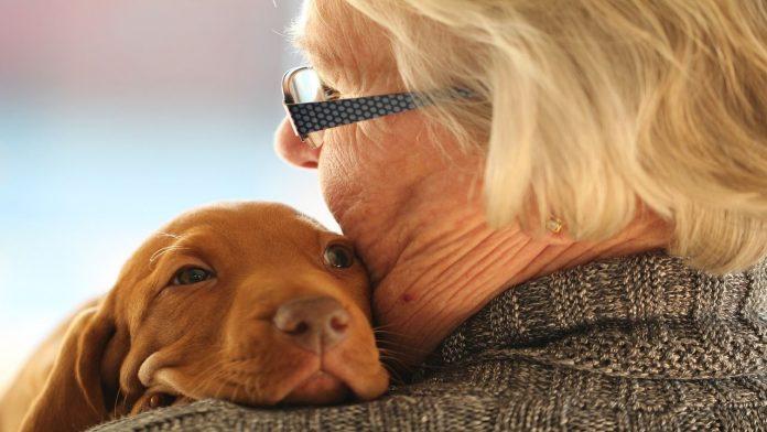 Le 6 razze di cani più adatte ai pensionati