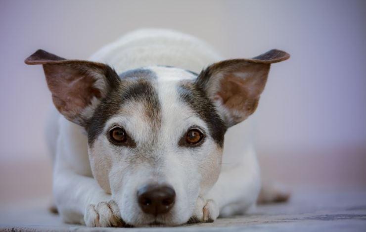 Come rinunciare al proprio cane senza abbandonarlo