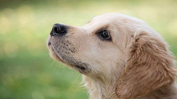 Cani che abbaiano troppo: come farli smettere con un trucco miracoloso