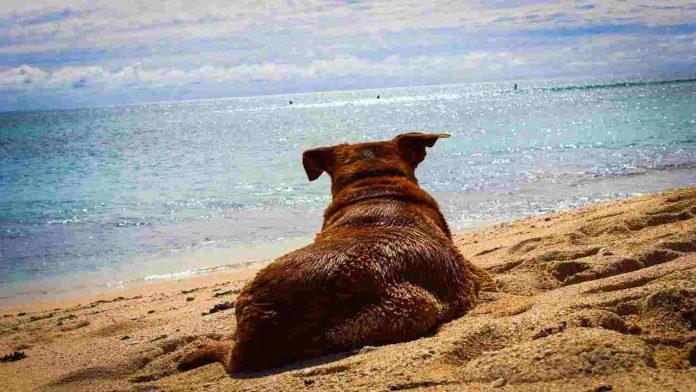 Cane in spiaggia: i pericoli a cui prestare attenzione