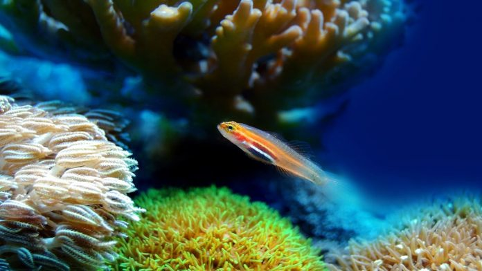 Cosa fare in caso di punture di animali marini, dalle attinie ai coralli