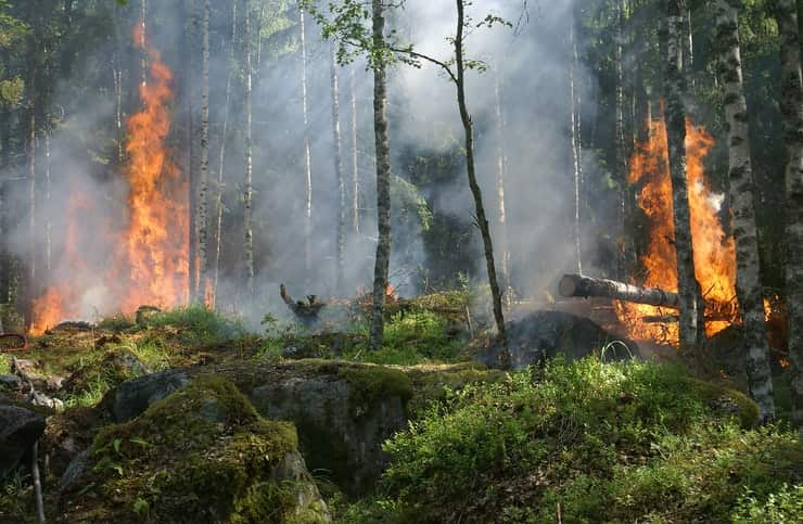 incendi boschi