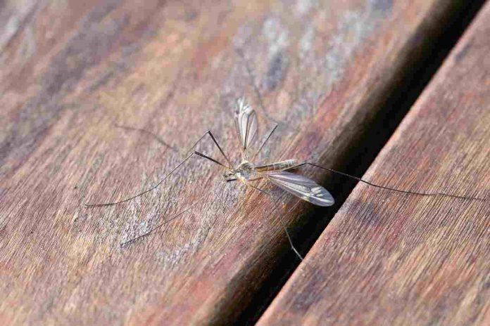 Dove si nascondono le zanzare dopo l'estate?
