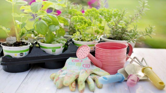 Giardinaggio: il kit di attrezzi che non può mancare