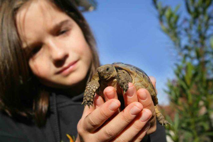 tartarughe di terra bambini