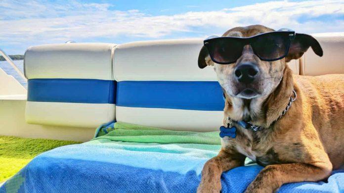 vacanza cane