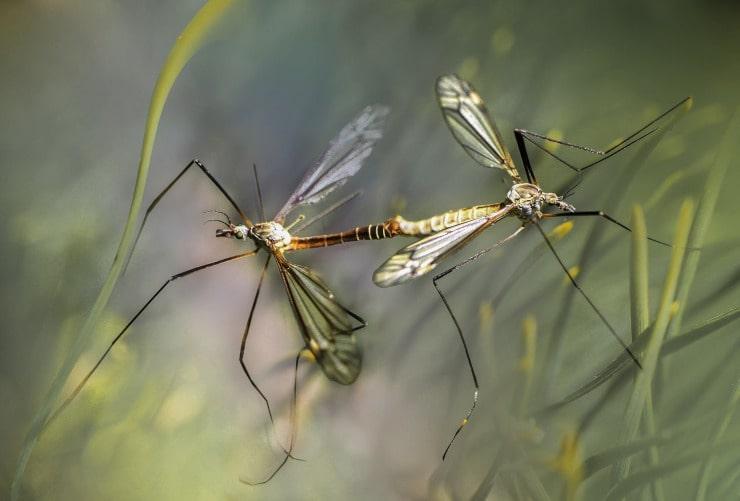 difendersi punture zanzare