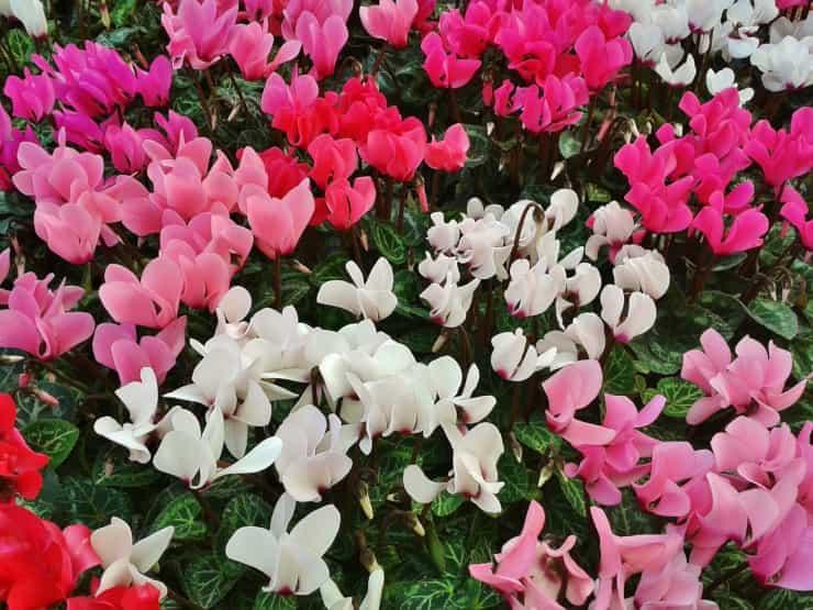 giardino fiorito inverno